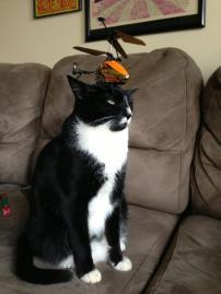 Prop Cat