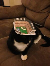 Stadium Cat